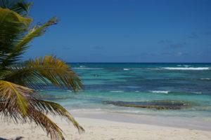 Palm tree and aqua sea