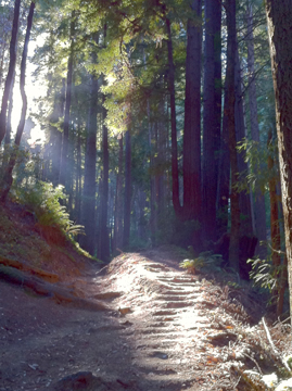 Sunlit Path in Redwoods - when not feeling joy in life, find your truth