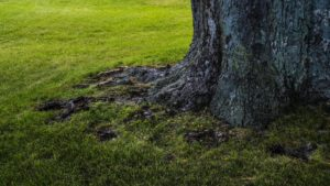Big tree roots - get to the root of feeling overwhelmed in your business